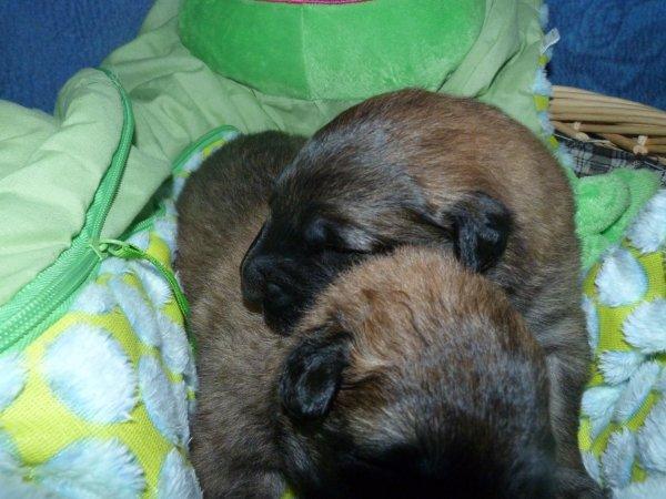 pendant ce temps là les sumos dorment sans berceuse !