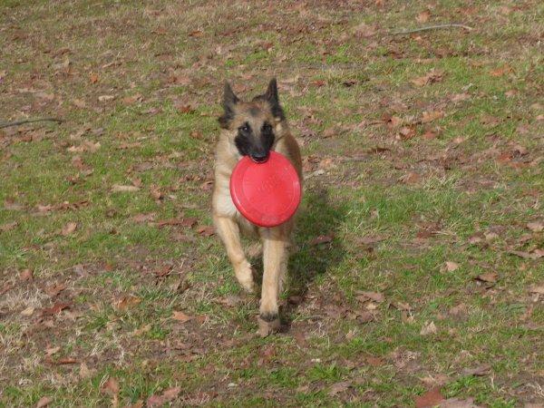 nouveau jeu pour finger le frisbee de fangio