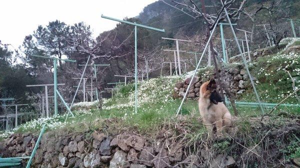 je suis bien arrivé au Liban et je suis un chien heureux avec un papa qui m'aime
