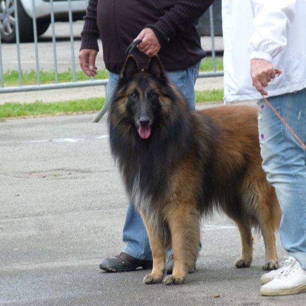 plus beau chien de l'expo notre fangio