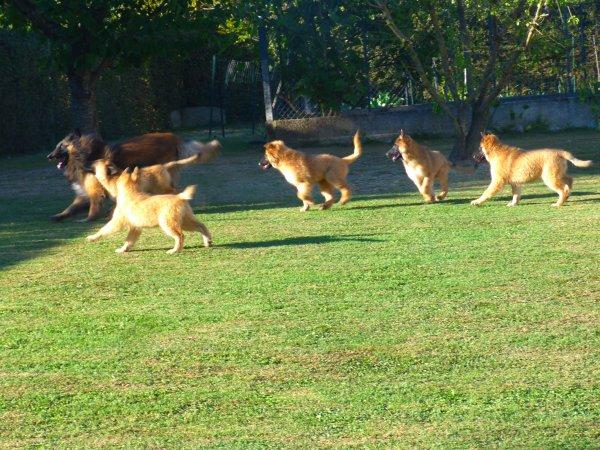 et bien sûr fangio leur a appris à jouer au frisbee
