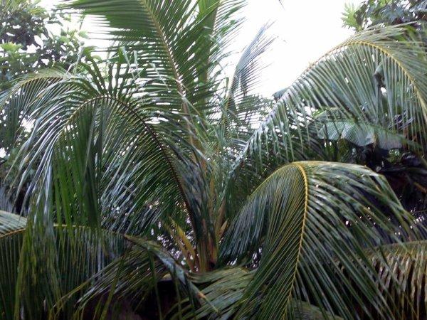 Image de palmier