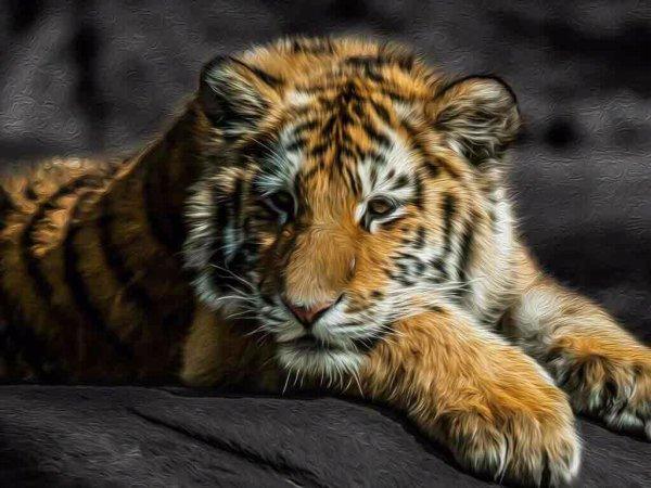 Ces Tigres ne sont-ils pas mignons ?