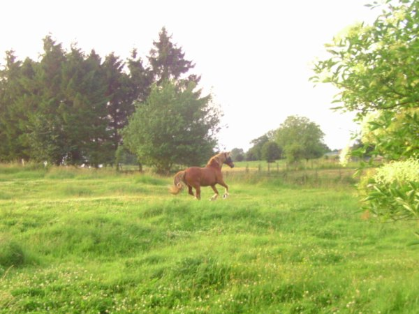 - Arréter de cherche l'homme de votre vie, chercher plutot le cheval de votre vie   ♥♥ -