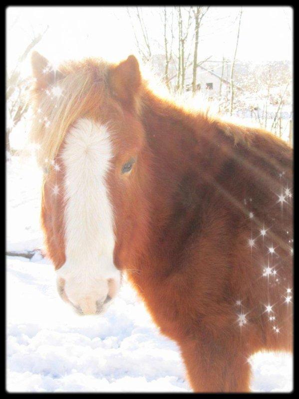"""Sans mors, sans éperon, sans bride, partons à cheval sur le vin pour un ciel féerique et divin ! Nous fuirons sans repos ni trêve, vers le paradis de mes rêves !"""""""