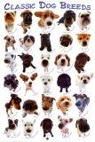 Photo de dog-addiction