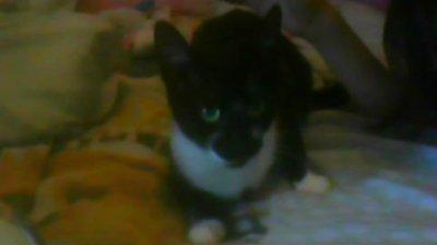 Saphir ~
