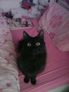MOn bb chat d'amOurrrr!!