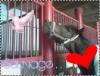 Happy--Horse-x3