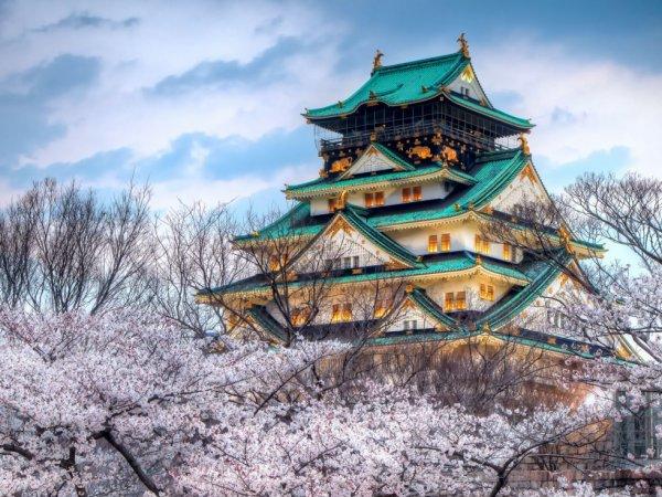 L'image du jour : Le Temple de la saison des cerisiers en fleurs à Osaka au Japon