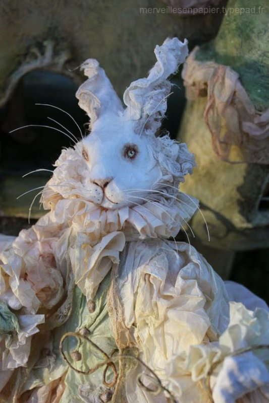 Image du jour : Le lapin blanc