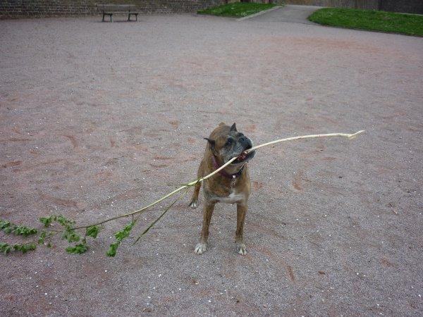 Regardez les zamis : j'ai trouvé un bâton !