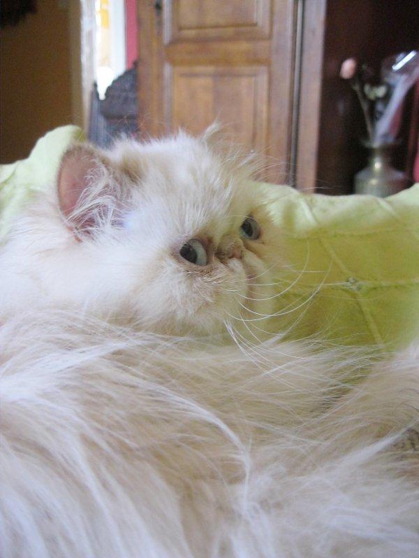 Pas contente Easy d'être dérangée à l'heure de la sieste par deux chatons dissipés...Ca va chauffer ! :-)