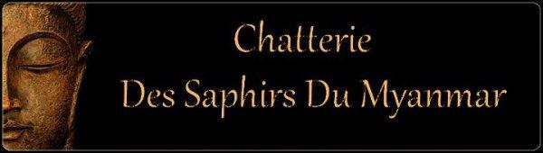 NOUVEAU : LA CHATTERIE DES SAPHIRS DU MYANMAR A ENFIN SON SITE  :-)