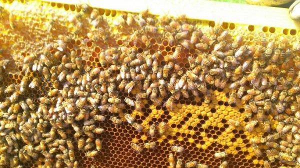 Avis au amateur j ais fait une récolte ci qu' elle qu' un est  intéressés 6¤ le pot de miel d acacia