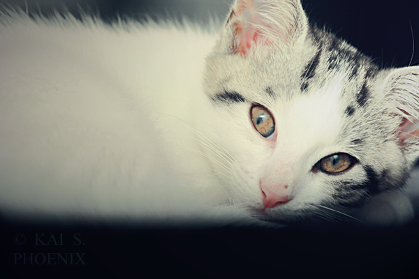 Subject :Sid (sep.11) - Canon EOS 1000D - Canon 70-300mm
