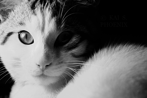 Subject :Sid (jan.12) - Canon EOS 1000D - Canon 70-300mm
