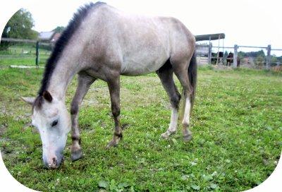 """"""" Je demande aux cavaliers qui me lisent et qui dressent leurs chevaux de regarder leur monture lorsqu'ils mettent pied à terre après une séance de travail, de contempler son oeil e de faire un examn de conscience pour se demander s'ils ont bien agi envers cet extraordinaire être vivant, ce compagnon adorable: le Cheval """""""