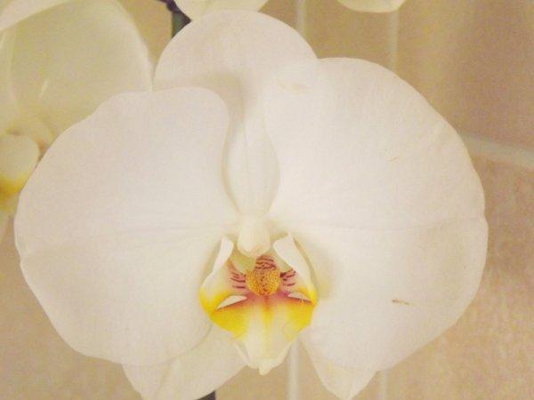 3ème orchidée