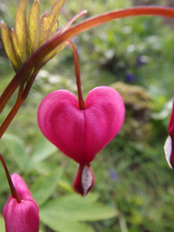A heart flower