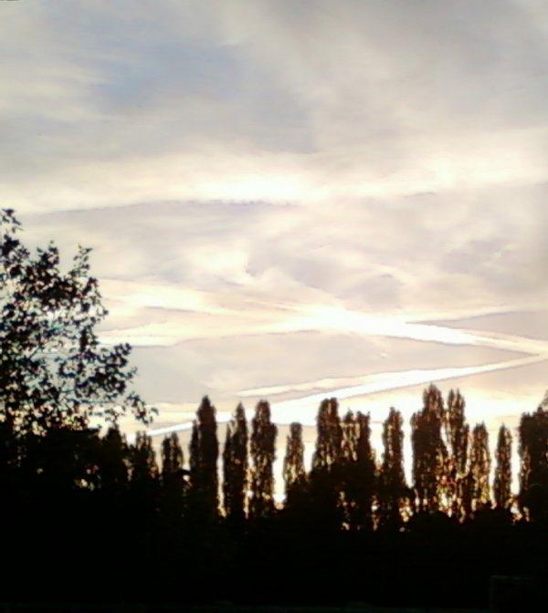 Ciel, arbres ...