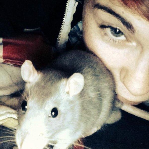 Jerry mon rat d'amour, Juedy mon ti chat