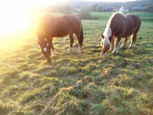 J'aime cette harmonie entre son cheval et l'humain. Monter à cheval donne un avant gout de la liberté parfaite