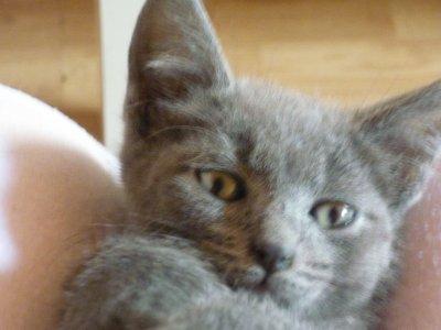 mon petit chat ( rasta )