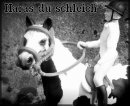 Photo de le-haras-du-schleich