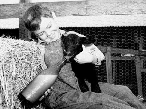 Danny, le petit mouton noir, 1948