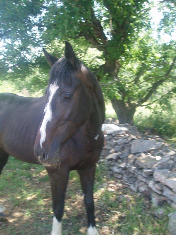Ma première rencontre avec ma propriétaire s'est effectuée en Ardèche en 2006, j'étais un petit gringalet de 3 ans très affectueux. Et pour ma propriétaire ça a été un vrai coup de foudre.