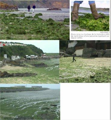 on reparle encore des algues