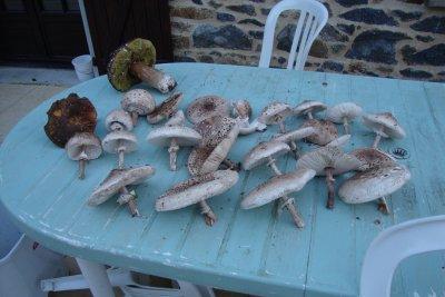 et cueillette de champignons 1
