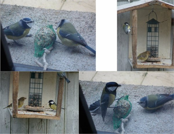 nos amis les oiseaux  2011 -2015