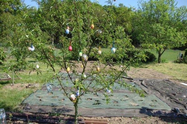 arbre   et oeufs  de  Pâques