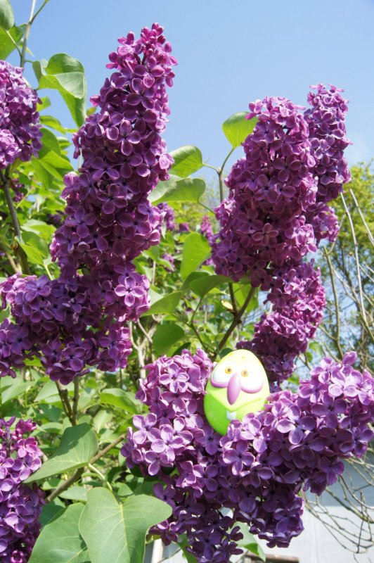 blog  bientôt  4 ans  -  fleurs et Pâques