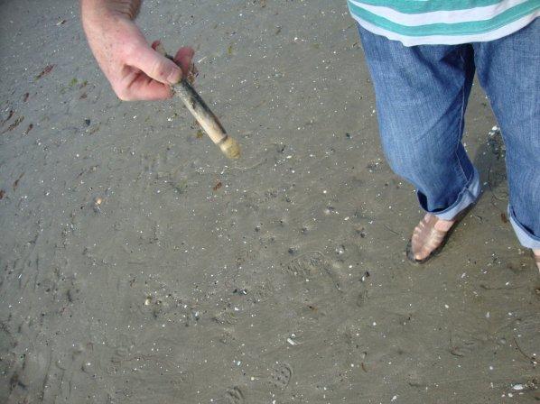 pêche aux couteaux  de  mer