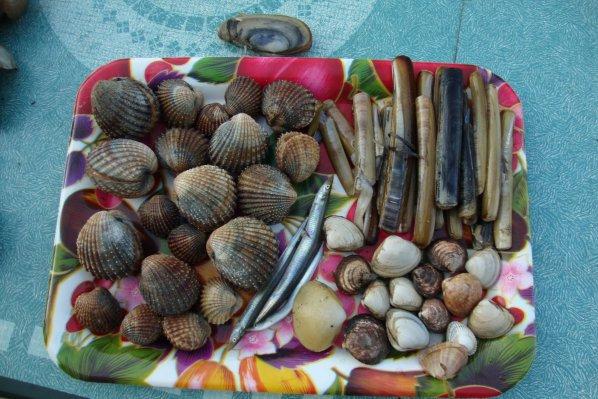 coquillages     des vernis