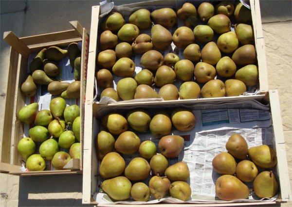 des pommes des poires et des  ????  pêches  et des prunes