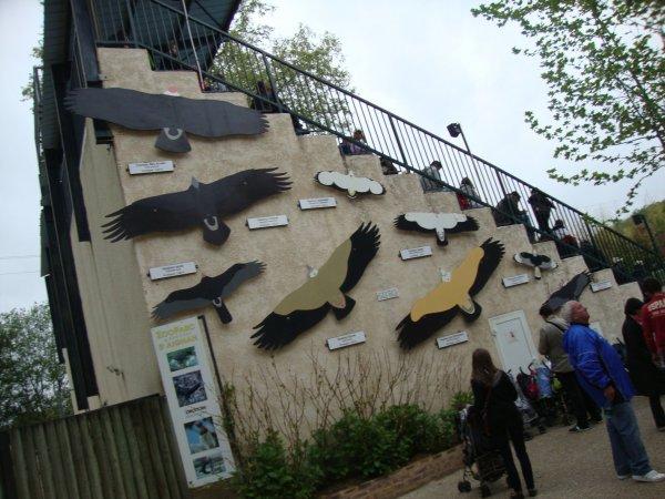 zoo de Beauval à Saint Aignan
