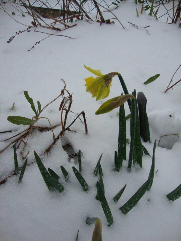 où est passé le printemps  ???