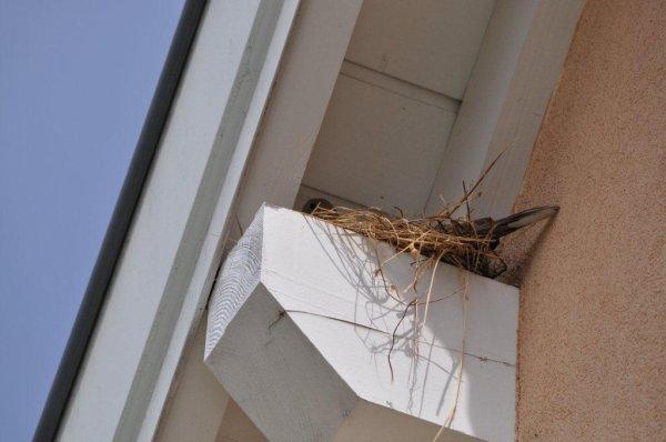 la naissance des oiseaux