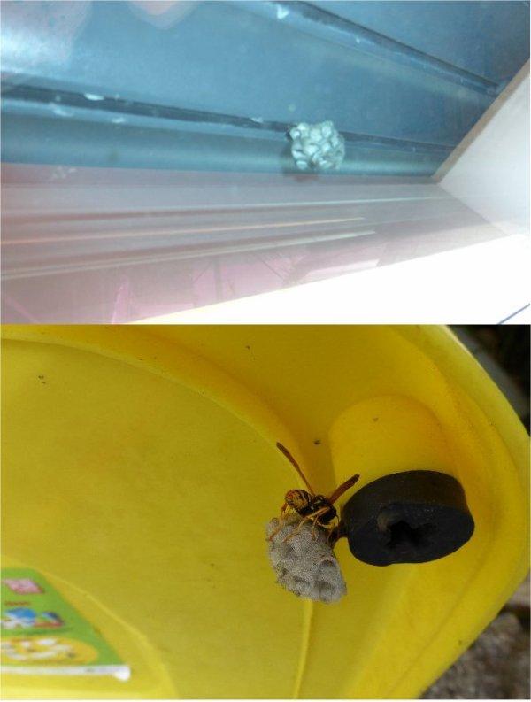 insectes et  animaux en  visite