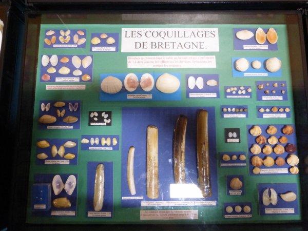 les  coquillages de  Bretagne
