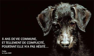 Contre l'abandon des Animaux !!!!