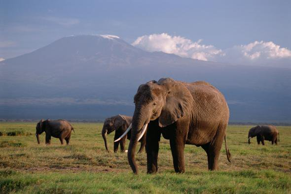 Stop with the elephants ! (ffs)