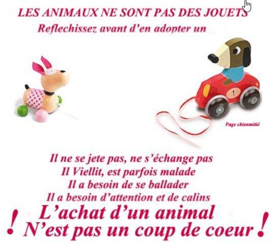 Les animaux ne sont pas des jouets