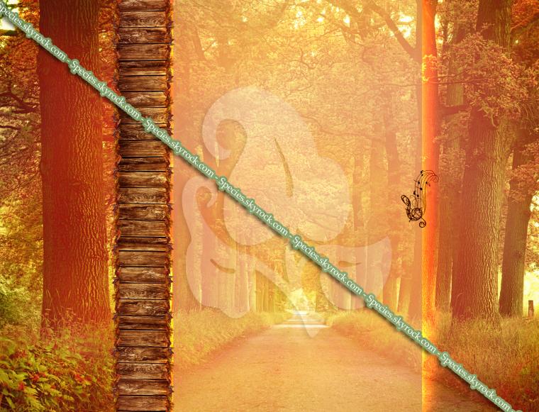 Habillage 13 - Chemin d'automne