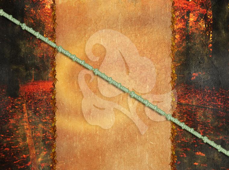 Habillage 15 - Automne pluie