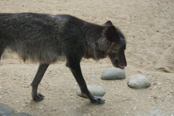 Encore quelques photos du Zoo de La Palmyre